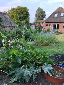 Courgetteplant & onze tuin