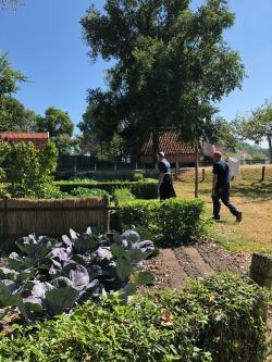 In klederdracht boontjes halen uit de tuin